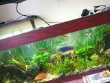 Продам аквариум с тумбой с оборудованием и рыбой